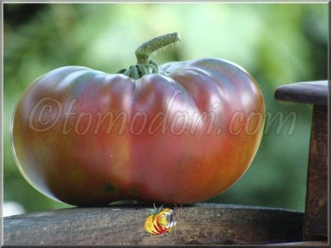 Tomate Ananas Noire